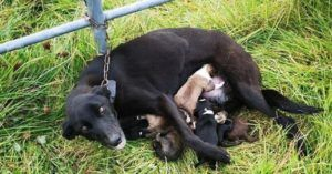 Hope For Nursing Mom Of Six Who Was Tied To A Gate & Abandoned