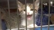Adorable Kitten Hasn't Quite Figured Out How To Meow So He Quacks Instead