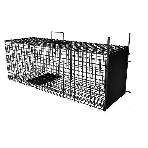 Best Raccoon Traps and Cages