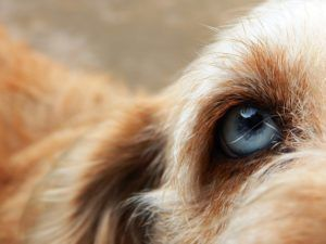 Eye Parasite That Can Cause Blindness In Dogs Is Making Headlines