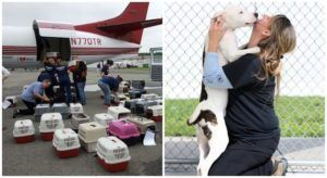 Dog Displaced By Hurricane Harvey Gets Flown To His New Forever Family, Thanks To You