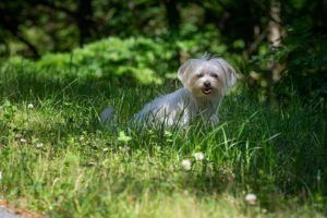 Just Because Your Backyard Is Fenced In Doesn't Mean Your Dog Is Safe