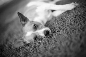 7 Things Your Deceased Pet Would Want You To Know
