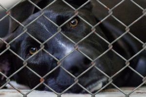 Humane Society Of Central Texas Needs Fosters & Adopters NOW!