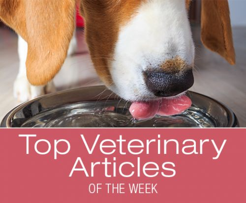 Top Veterinary Articles of the Week: Dog Water Bowls