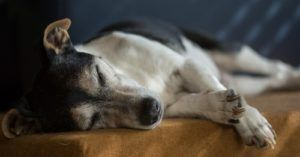 Shelters Notice More Families Surrendering Senior Dogs To Buy Puppies Instead