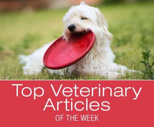 Top Veterinary Articles of the Week: Facial Nerve Paralysis, Pentobarbital in Pet Food, and more