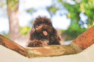 10 Breeds That Are A Great Match For Allergy Sufferers