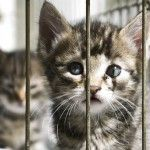 Effect of Visitor Perspective on Adoption Decisions at One Animal Shelter