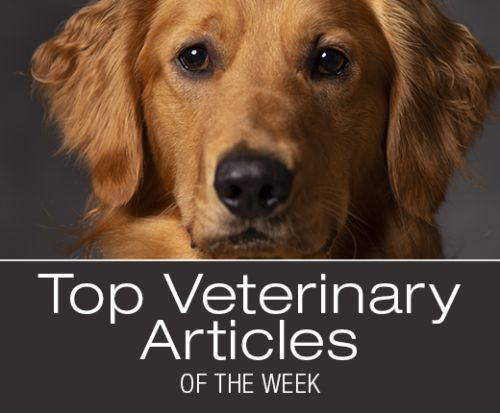 Top Veterinary Articles of the Week: Ethylene Glycol Intoxication, Aural Hematomas, and more