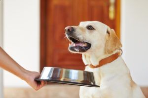 FDA Recall: Darwin's Natural Dog Food Tests Positive For Salmonella