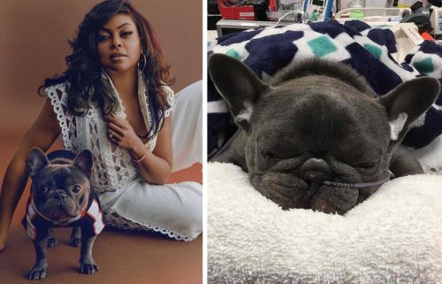 """Taraji P. Henson """"A Wreck"""" After Her Frenchie Passes"""