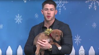 Nick Jonas Wants To Find Forever Homes For These Adorable Rescue Puppies