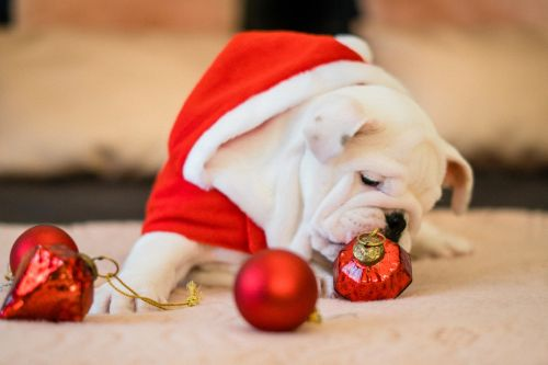 Holiday Pet Safety Tips | Winslow Animal Hospital Dog & Cat