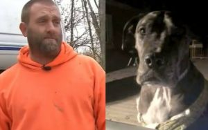 Family of Five Credits Their 150-Pound Dog For Stopping Home Invasion