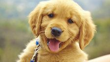 The Ridiculously Cute Dog Challenge To Distract You From All The Doom And Gloom