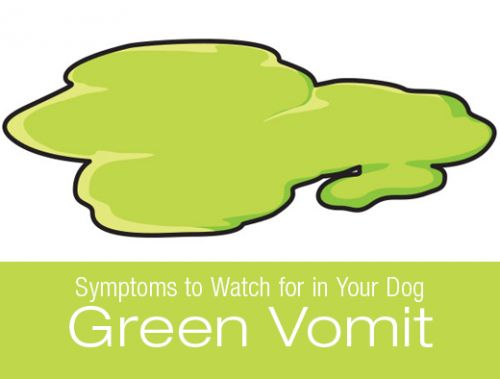 Symptoms to Watch for in Your Dog: Green Vomit