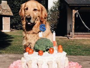 Don't Touch This Dog's Birthday Cake!