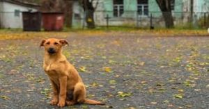 Even After A Nuclear Meltdown The Dogs of Chernobyl Never Gave Up Hope
