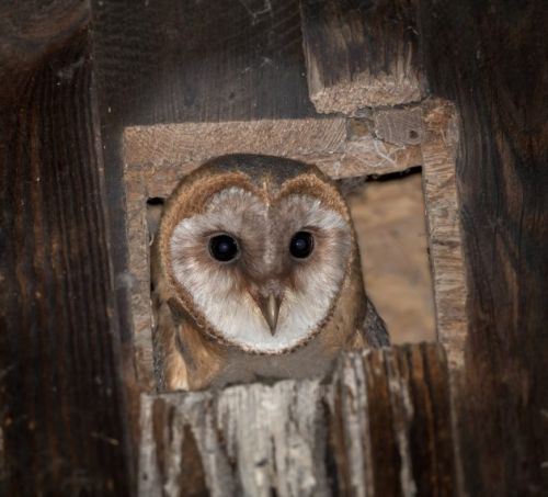 Another post about owls