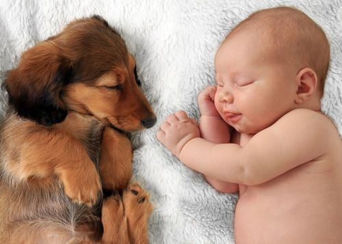5 Things To Remember When You Have A Newborn And A Pet Living Under The Same Roof