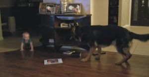 Dog & Baby Play The Cutest Game Of Chase