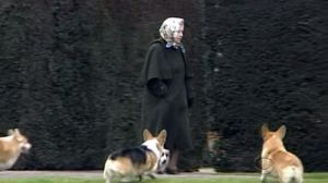 A Glimpse Inside The Pampered Life Of The Queen's Dogs