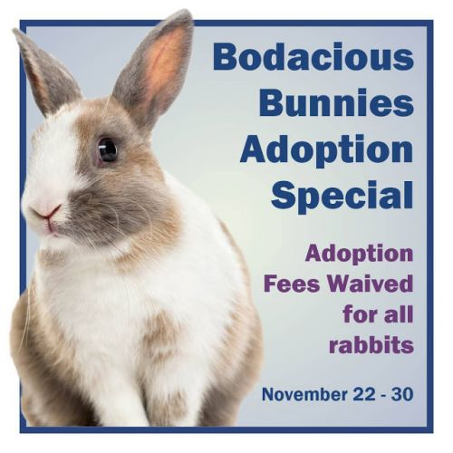 """BUNNY ADOPTION SPECIAL"" Nov 22nd through Nov 30th"