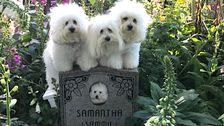 Barbra Streisand's Cloned Dogs Paw Their Respects At Grave Of 'Mom'