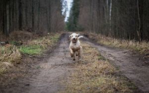 Uncovering The Mystery Of How Some Lost Dogs Find Their Way Home