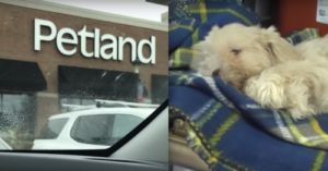 Humane Society Is Investigating Petland Due To Animal Cruelty