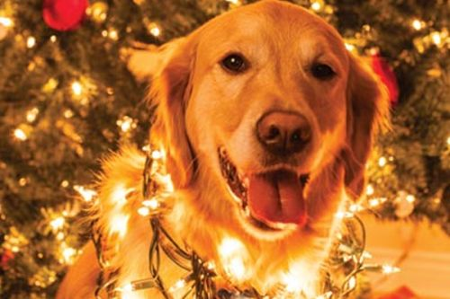 Top Veterinary Articles of the Week: What to Do When Your Dog Eats Glass, The Twelve Pets of Christmas, and more