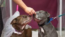 Animal Shelter Throws Senior Dogs Adorable Wedding So They Can Get Adopted Together