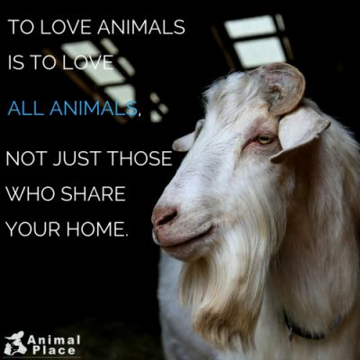 As an animal lover, we know you would never harm a cat or a dog