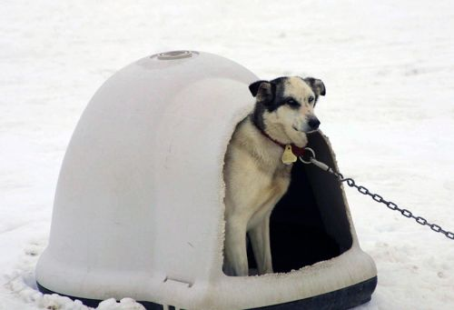 Winter Weather Advisory: Keep Animals Safe and Warm This Winter