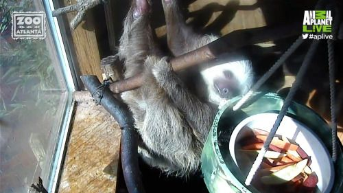 Something tells us that the sloths were up partying all night