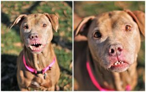 Dog With Quirky Smile Needs A Home