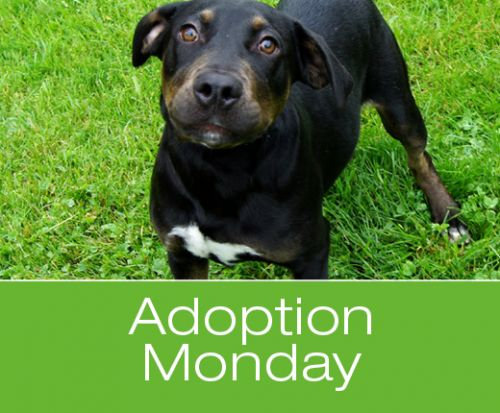 Adoption Monday: Midnight, Mix Breed, New Milford, CT