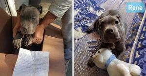 12-Year-Old Boy Leaves Puppy Outside Shelter With A Devastating Note