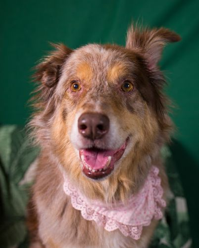 """PONY"" handsome mature Aussie UPDATE"
