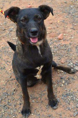 Adoption Monday: Polly, Keeshond & Mixed Breed Mix, Page, AZ