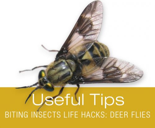 Useful Tips for Dog Walking: Biting Insects Life Hacks - Deer Flies