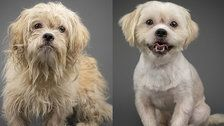 These Before-And-After Photos Of Rescued Dogs Show The Power Of A Good Haircut