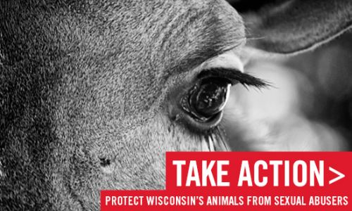 Protect Wisconsin's Animals from Sexual Abusers