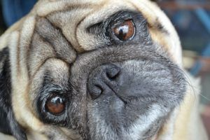 The Complete Natural Remedies Guide For Itchy Dogs And Dogs With Allergic Skin Reactions
