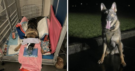 Famous Police Dog Survives Shooting And Gets Heroic Welcome Home