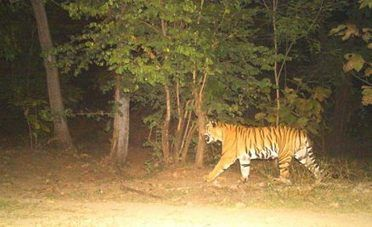 Electric trap killed tiger, say forest officials