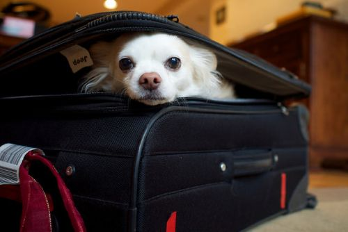 The Top 7 Hotel Chains For Traveling With Your Dog