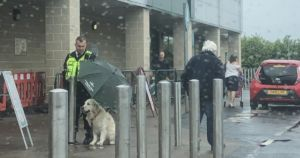 Security Guard Becomes Hero After Protecting Dog From Rain