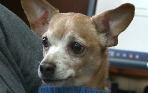 Man Wants To Re-Adopt Surrendered Dog After Donors Paid For His Care